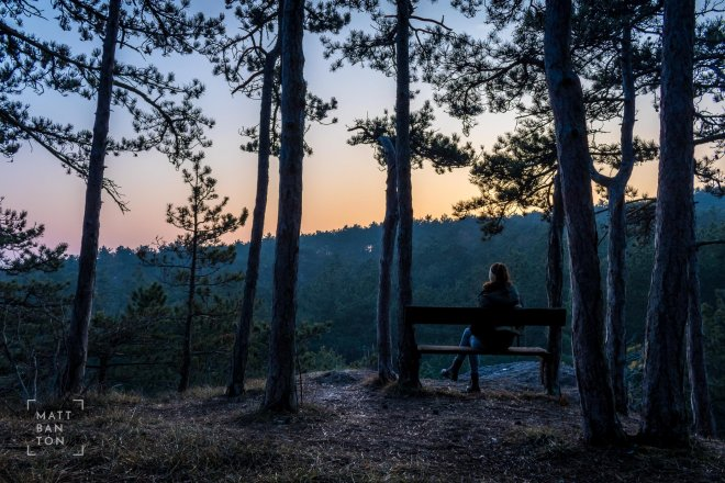 Landscape photography of person in woods at sunset